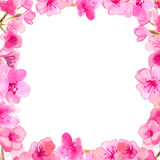 Cherry blossom frame. Watercolor pink flovers Stock Image
