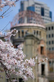 Cherry blossom in front of the A-Bomb Dome, Hiroshima, Japan Royalty Free Stock Photography