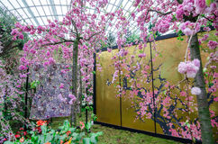 Cherry Blossom at Garden by the bay. Singapore – 25 March 2016: Flower Dome of Garden by the Bay shrouded by the delicate pink petals of Sakura flowers. Cherry Royalty Free Stock Image