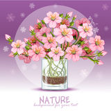 Cherry blossom in a glass. Background with cherry blossom in a glass Royalty Free Stock Image