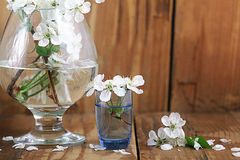 Cherry blossom in glass white background Royalty Free Stock Photos