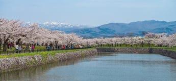 Cherry blossom at Goryokaku park Stock Photos