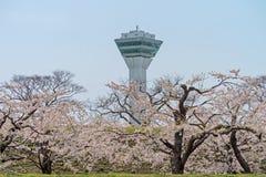 Cherry blossom at Goryokaku park Stock Image