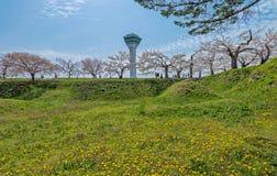 Cherry blossom at Goryokaku park Stock Photography
