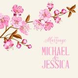 Cherry blossom Royalty Free Stock Photo