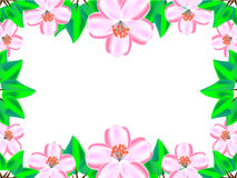 Cherry blossom between green leaves. For background Royalty Free Stock Images