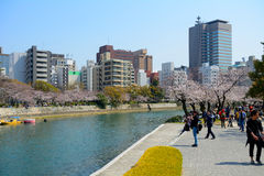 Cherry blossom, Hiroshima, Japan Royalty Free Stock Images