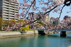 Cherry blossom, Hiroshima, Japan Stock Photos