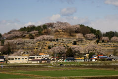 Cherry blossom, Honshu, Japan Stock Photo