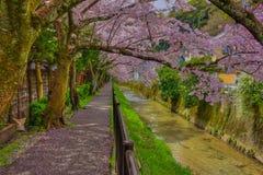 Cherry Blossom Hot Spots i Sakyo-ku, Kyoto arkivbilder