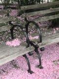 Cherry Blossom i New York City Royaltyfria Foton