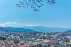 Cherry Blossom i Takato Royaltyfri Bild