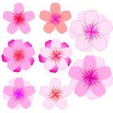 Cherry blossom icon set. Modern Vector illustration Stock Photo