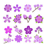 Cherry blossom icon set Stock Images