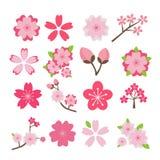 Cherry blossom icon set Royalty Free Stock Photography
