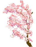 Cherry Blossom. Illustration of a branch of cherry blossom Royalty Free Stock Photos