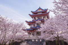 Free Cherry Blossom In Chinese Garden Yuantouzhu Royalty Free Stock Photography - 98248657
