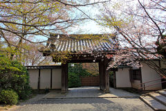 Cherry Blossom.Japan. The entrance of the  Ryoan-ji Temple,Kyoto,Japan Royalty Free Stock Photography