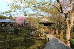 Cherry Blossom.Japan. Cherry Blossom in the Ryoan-ji Temple,Kyoto,Japan Stock Photo