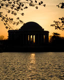 Cherry Blossom and Jefferson Memorial Stock Photography