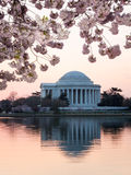 Cherry Blossom and Jefferson Memorial at sunrise Stock Photo