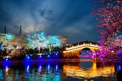 Cherry Blossom Joy royaltyfri foto