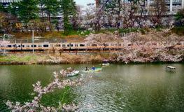 Cherry blossom at Kagurazaka, Tokyo, Japan Stock Photos