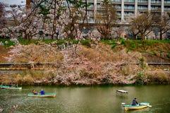 Cherry blossom at Kagurazaka, Tokyo, Japan Stock Photo