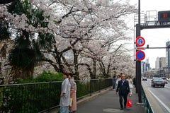 Cherry blossom at Kagurazaka, Tokyo, Japan Stock Images
