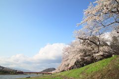Cherry blossom  in  Kakunodate Stock Photo