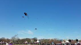 Cherry Blossom Kite Festival sul National Mall in Washington, DC video d archivio