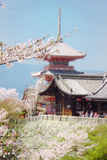 Cherry blossom in Kiyomizu temple, Kyoto royalty free stock photo