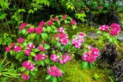Cherry blossom in Koko-en garden - Himeji Royalty Free Stock Photography