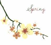 Cherry Blossom kortdesign royaltyfri foto