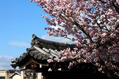 Cherry blossom in Kyoto Stock Image