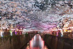 Cherry blossom lined Meguro Canal at night in Tokyo, Japan. Spri. Ngtime in April in Tokyo, Japan Stock Photo