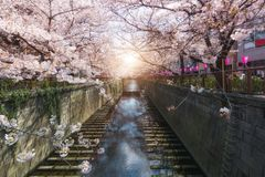 Cherry blossom lined Meguro Canal in Tokyo, Japan. Springtime in April in Tokyo, Japan. Cherry blossom lined Meguro Canal in Tokyo, Japan stock photo
