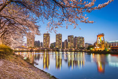 Cherry blossom in Lotte World amusement park at night ,Seoul kor Stock Photography