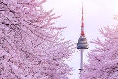 Cherry Blossom med det seoul tornet arkivfoton