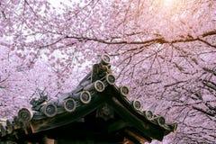 Cherry Blossom med det traditionella japanska taket Körsbärsröd blomning i våren, Japan Fotografering för Bildbyråer