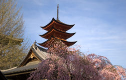 Cherry blossom, Miyajima, Japan Royalty Free Stock Images