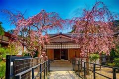 Cherry blossom, Miyajima, Japan Stock Image