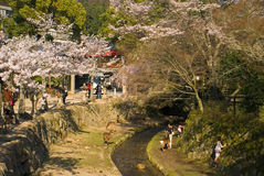 Cherry blossom, Miyajima, Japan Stock Images