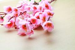 Cherry blossom model Royalty Free Stock Photography