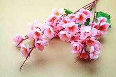 Cherry blossom model Stock Image