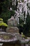 Cherry blossom, Nara, Japan Stock Photo