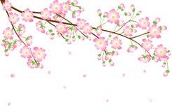 Cherry Blossom-Niederlassung Lizenzfreie Stockfotografie