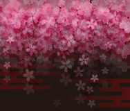 Cherry blossom at night, background image Stock Image