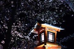 Cherry blossom at night, Osaka Japan Stock Photography