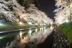 Cherry blossom at night Royalty Free Stock Images